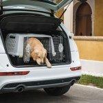 Hundebox Gulliver Touring geeignet für Retriever, Labrador