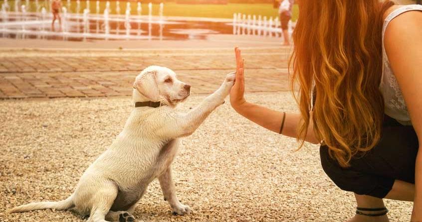 Erwachsenen-Hund-an-Hundebox-gewöhnen