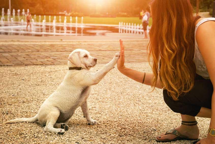 Erwachsenen Hund an Hundebox gewöhnen – der ULTIMATIVE Guide